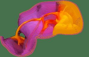 Vance Graphix - Print and web